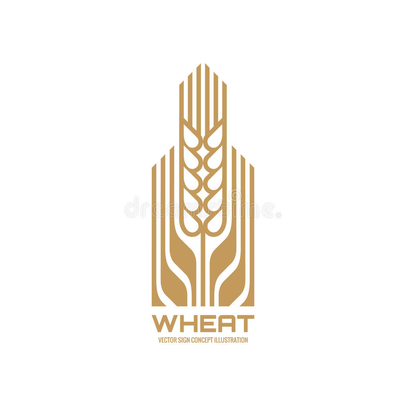 Ear of wheat - vector logo template concept illustration. Cereal organic sign. Ecology nature symbol. Agriculture icon. vector illustration