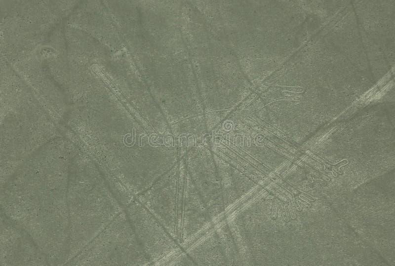 Earial widok Nazca linie zdjęcie royalty free