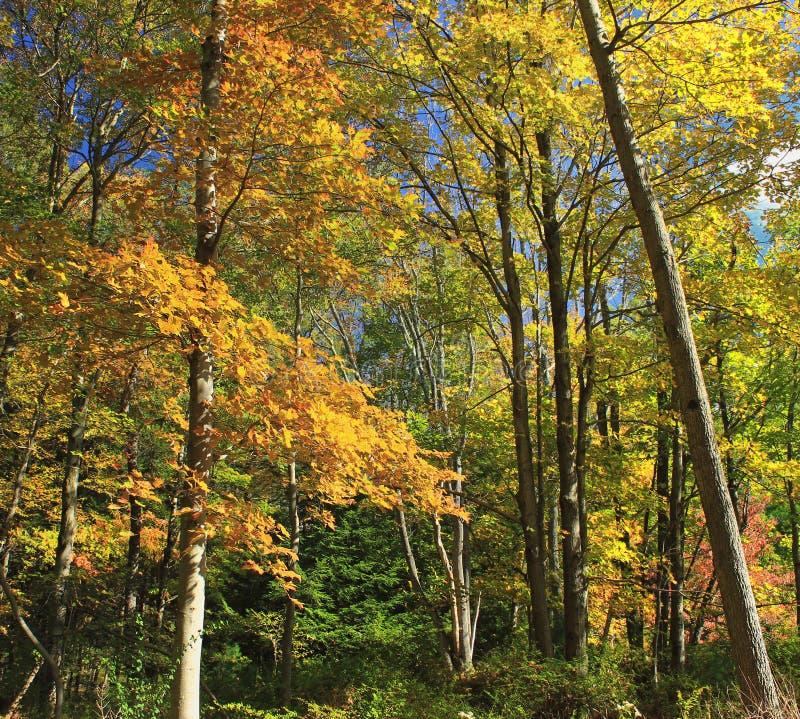 Early Autumn (6) Free Public Domain Cc0 Image