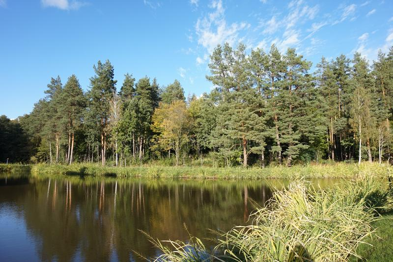 Panorama of a small well-kept pond in the coniferous forest. stock images