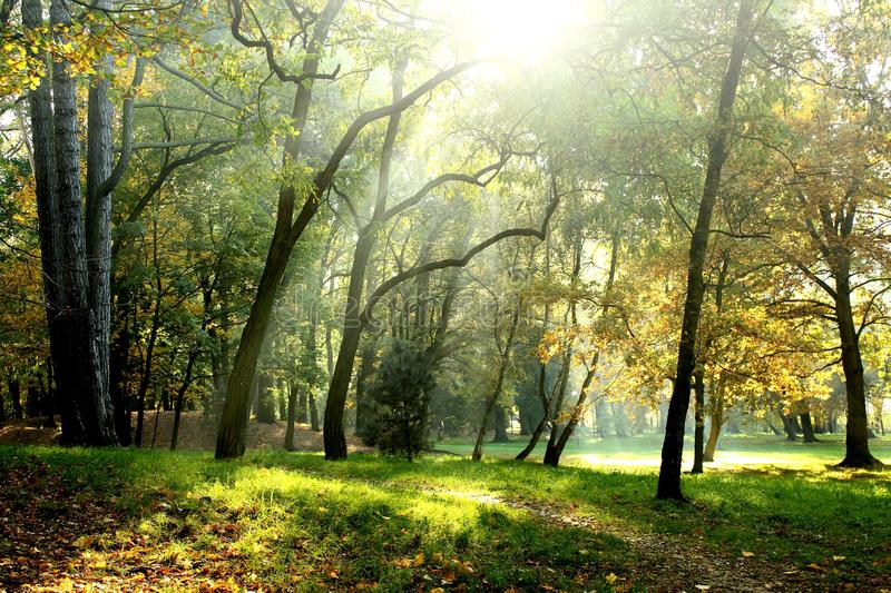 Early autumn park. Early autumn green yellow park stock photography