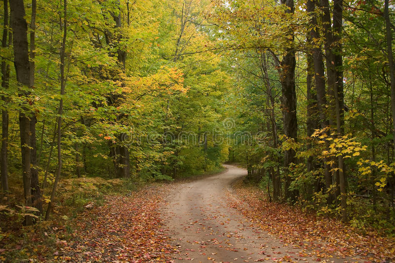 Early Autumn Tree Lined Dirt Road. A dirt road winds through a forest of tall maple trees in early autumn stock photography