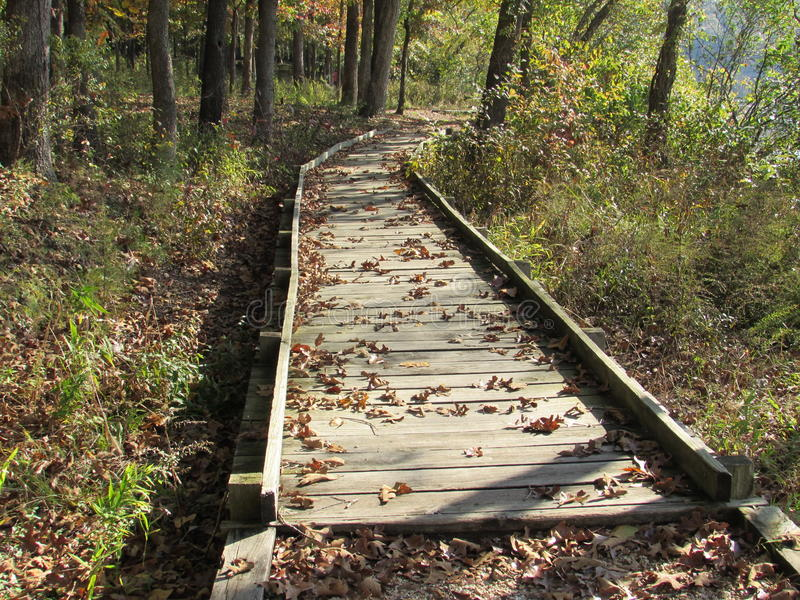 Early Autumn Wooden Pathway through the Forest stock image