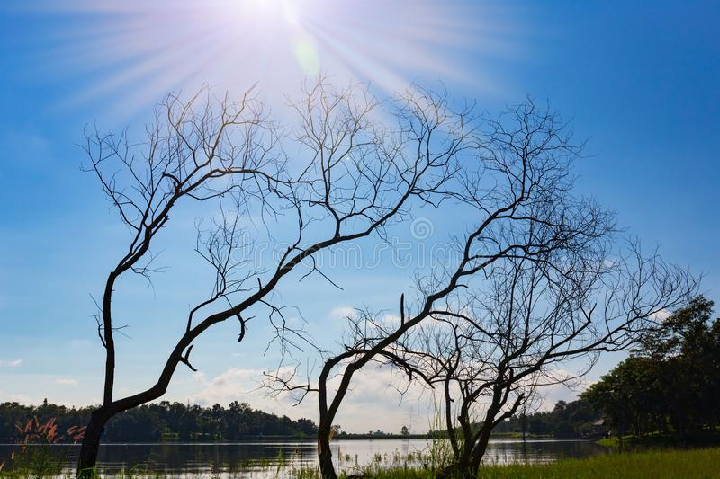 Early death with the sky as the background. royalty free stock photo