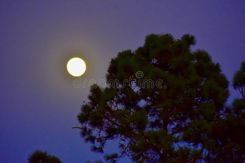 An early evening full moon stock photography