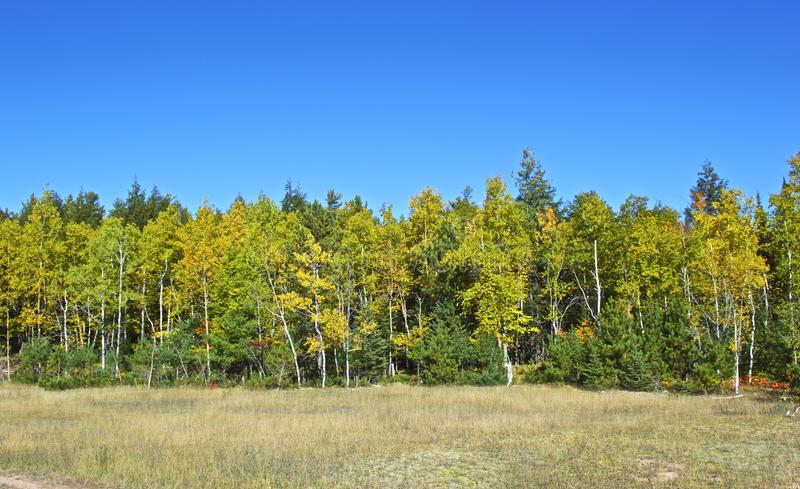 Early Fall Color stock photo