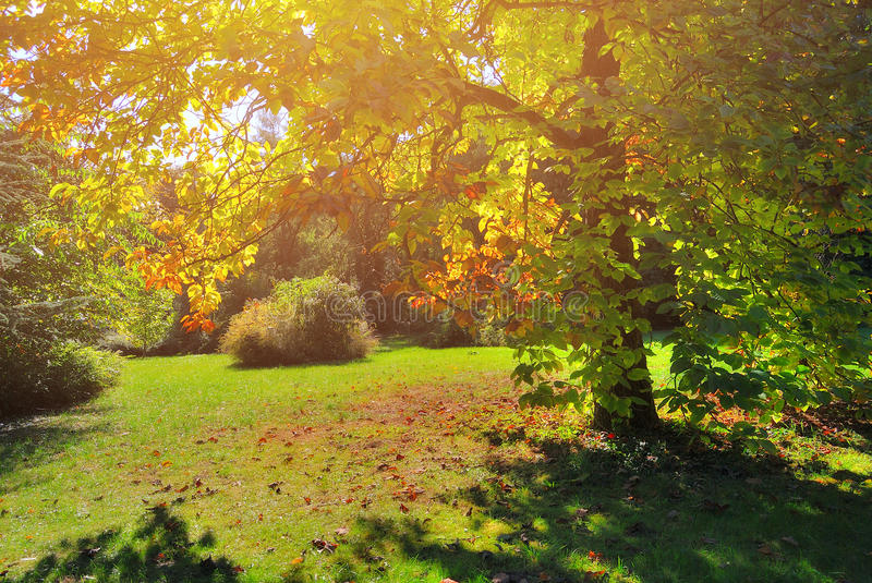 Early Fall Foliage Autumn Trees royalty free stock images