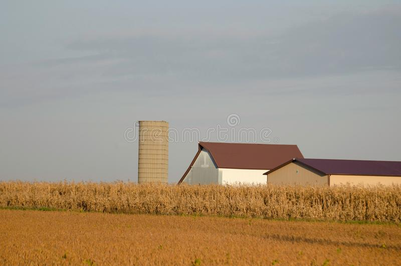 Early Fall before harvest stock photography