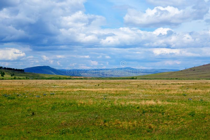 Early June in the steppe. Khakassia, Russia royalty free stock photography
