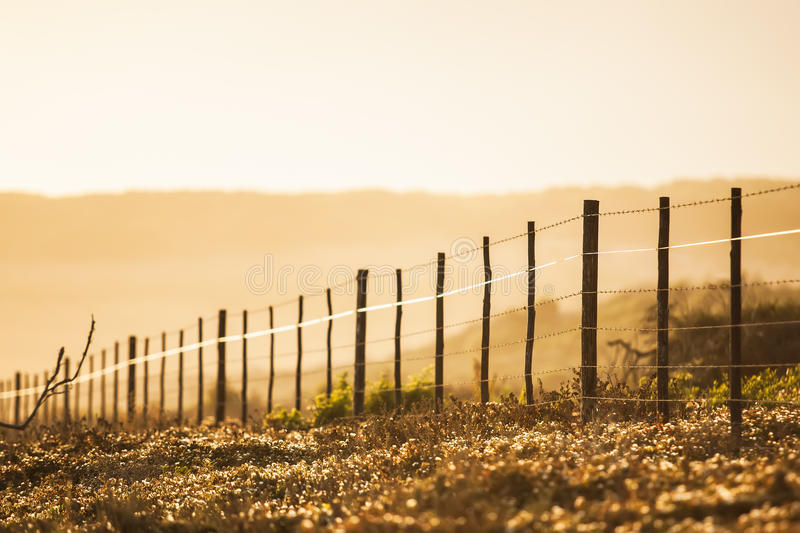The early morning royalty free stock photo