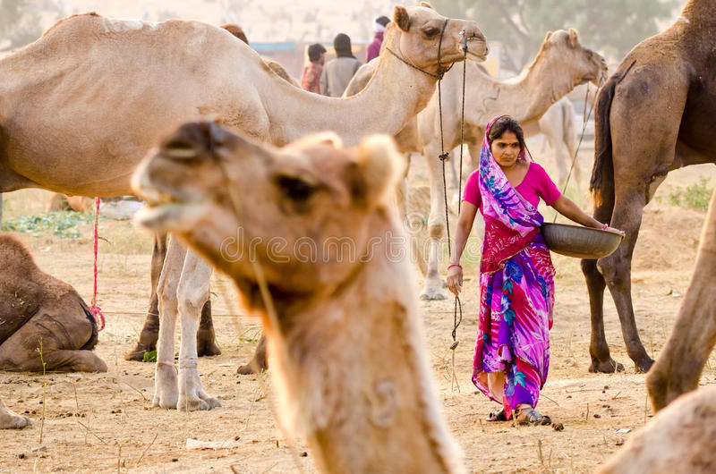 Early Morning Activities At Pushkar Camel Fair, Rajasthan, India royalty free stock image