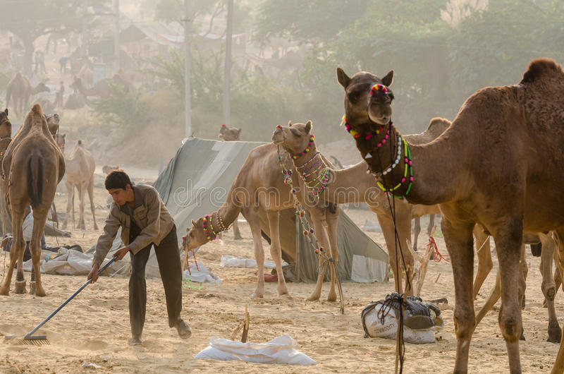 Early Morning Activities At Pushkar Camel Fair, Rajasthan, India royalty free stock photography
