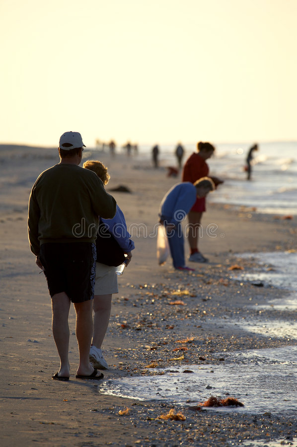 Early morning avid shell hunters. Looking for freshly washed up sea shells near bowmans beach famous for the abundance of shells on Sanibel Island Florida royalty free stock photography