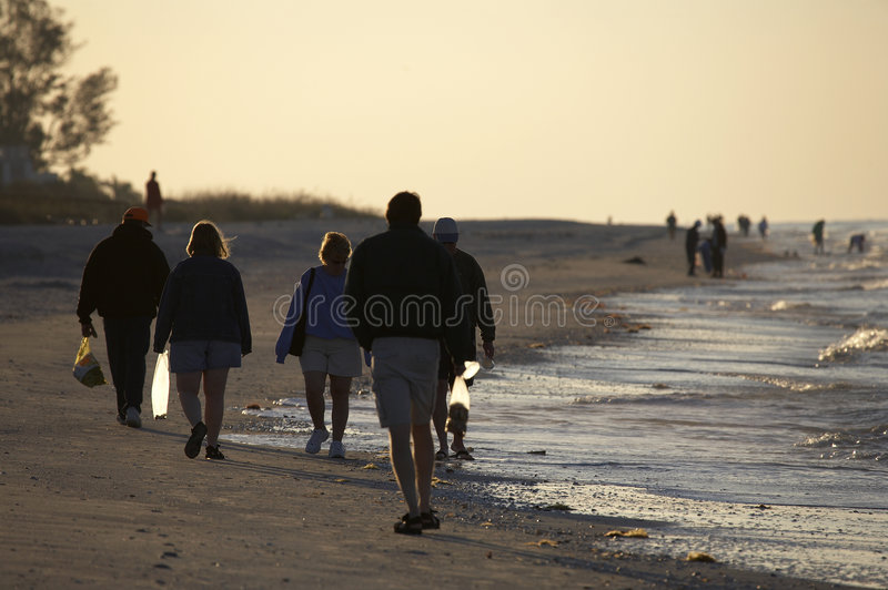 Early morning avid shell hunters. Looking for freshly washed up sea shells near bowmans beach famous for the abundance of shells on Sanibel Island Florida royalty free stock images