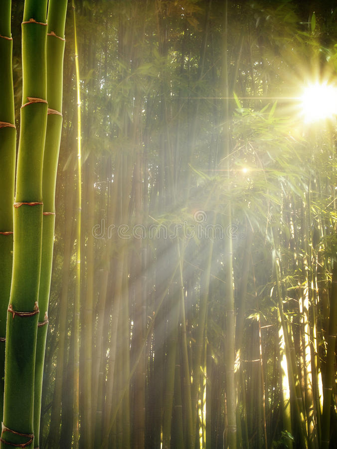 Download Early Morning In The Bamboo Forest Stock Photo - Image: 25736936