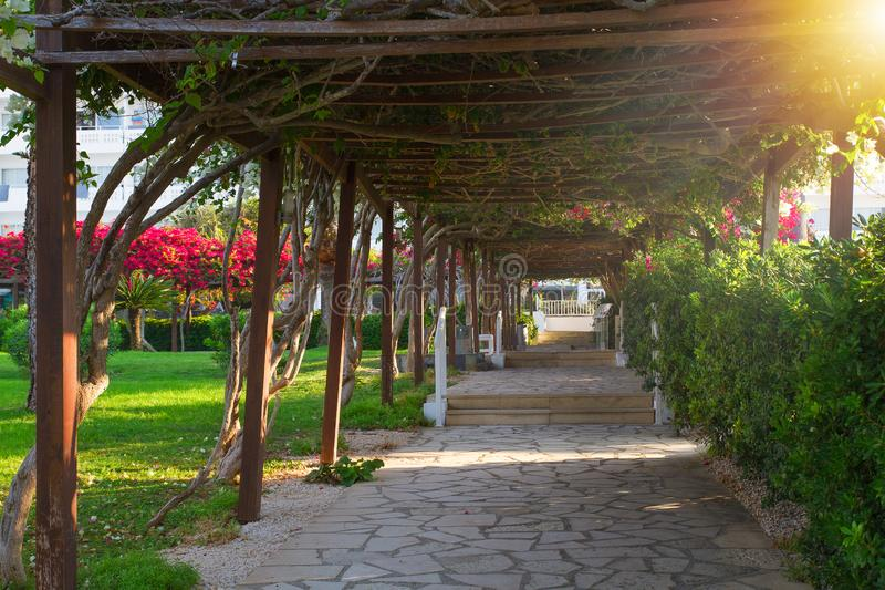 Early morning in beautiful tropical garden with tunnel covered with creeping plants in Ayia Napa, Cyprus. Coast of Mediterranean Sea stock images