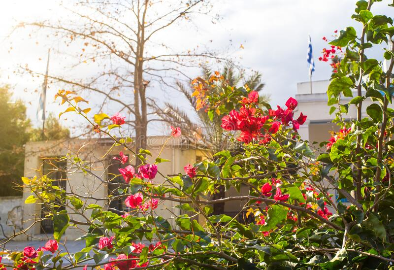 Early morning, beautiful warm light, red flowers green plant, urban nature scene royalty free stock images