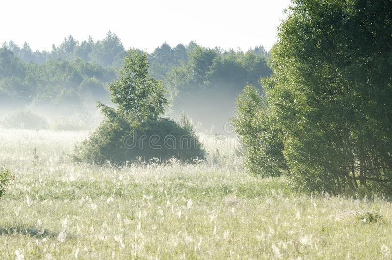 Early morning countryside landscape mist stock image