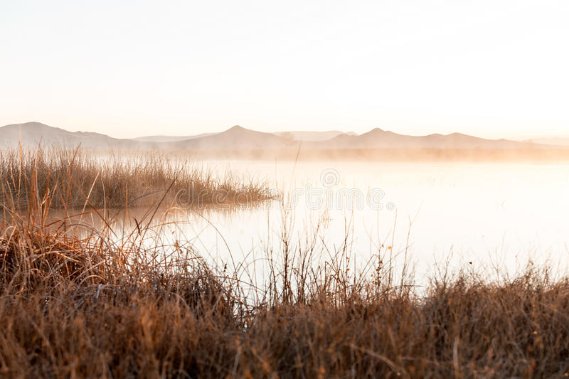 Early morning dawn scene. Over a foggy pond royalty free stock photos