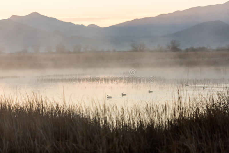 Early morning dawn scene. Over a foggy pond royalty free stock photo