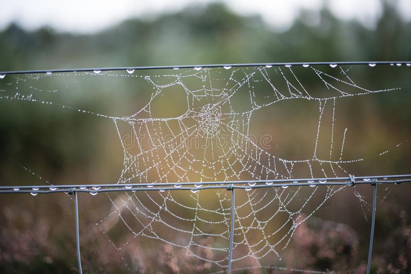 Early morning dew on spider`s web hanging from a wire fence in a field royalty free stock photos