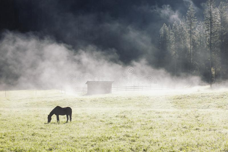 Early morning farm landscape with lonely horse silhouette in fog grazing royalty free stock images