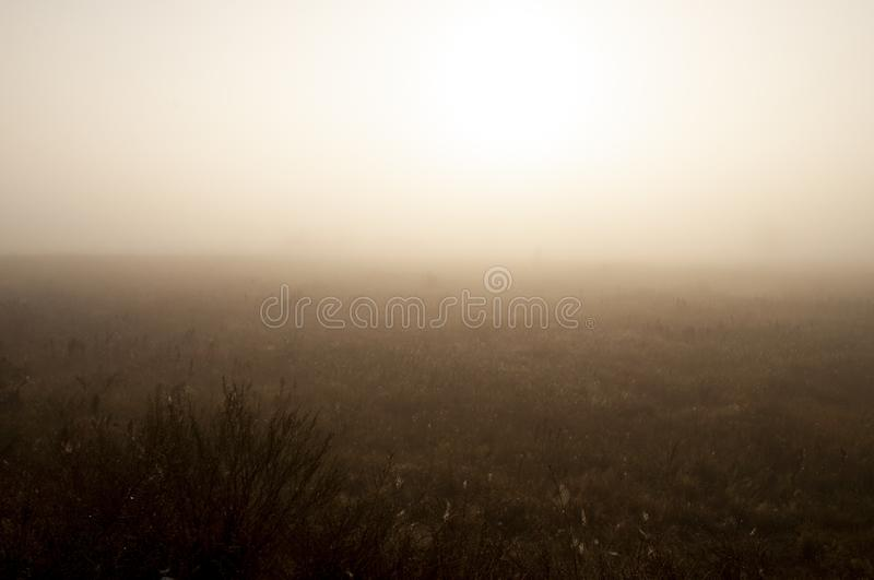 Early morning in the field with autumn fog and drops of water in the air. Tints of brown. Nothing could be seeing far away. Beauti royalty free stock photos
