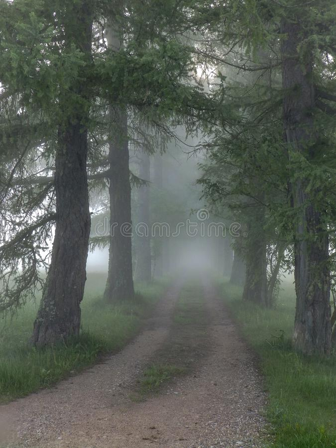 Early morning when the fog covered the area. Beautiful early morning when the fog covered the area royalty free stock images