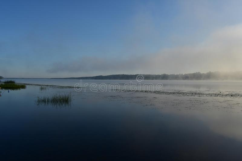 Early morning fog river rises above the water, reeds lilies of the valley in the water royalty free stock photography