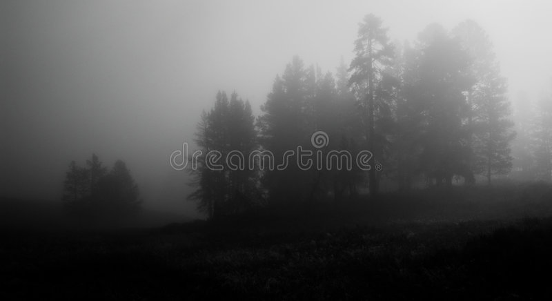 Early morning fog in Yellowstone national park royalty free stock photography