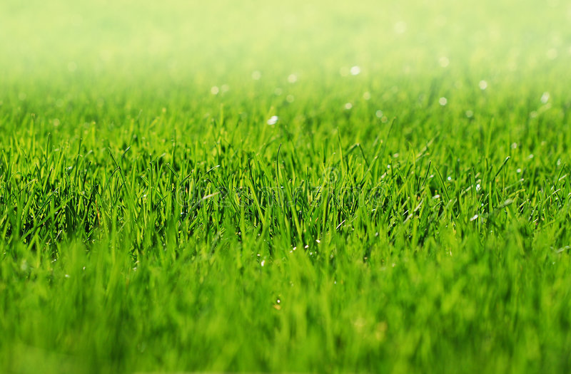 Early Morning Grass with fog stock photography