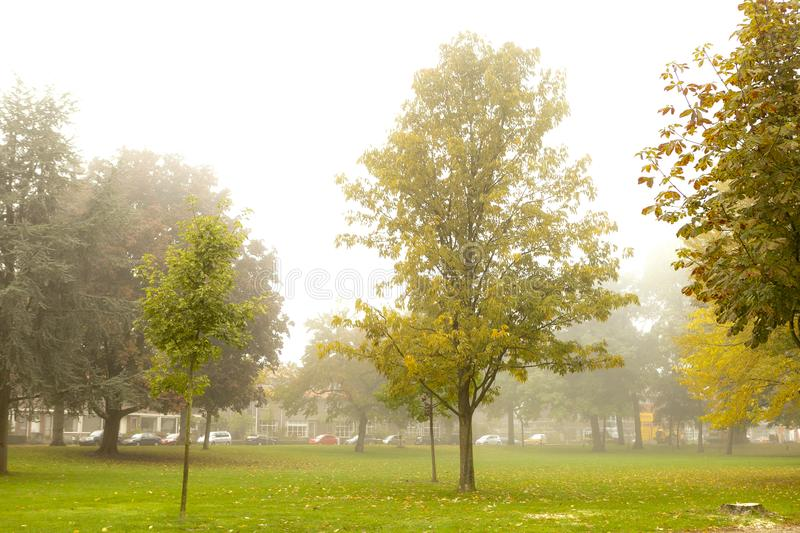 Early morning hazy mist in a neighbourhood park in The Netherlands with the trees having various autumn colours royalty free stock images