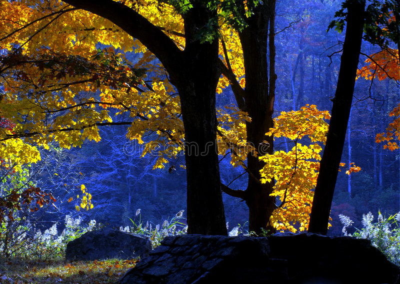 Download Early morning light stock image. Image of forest, color - 5248455