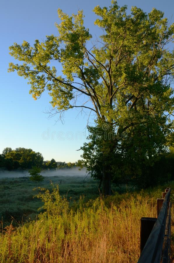 Early Morning Light BathesTree stock photography