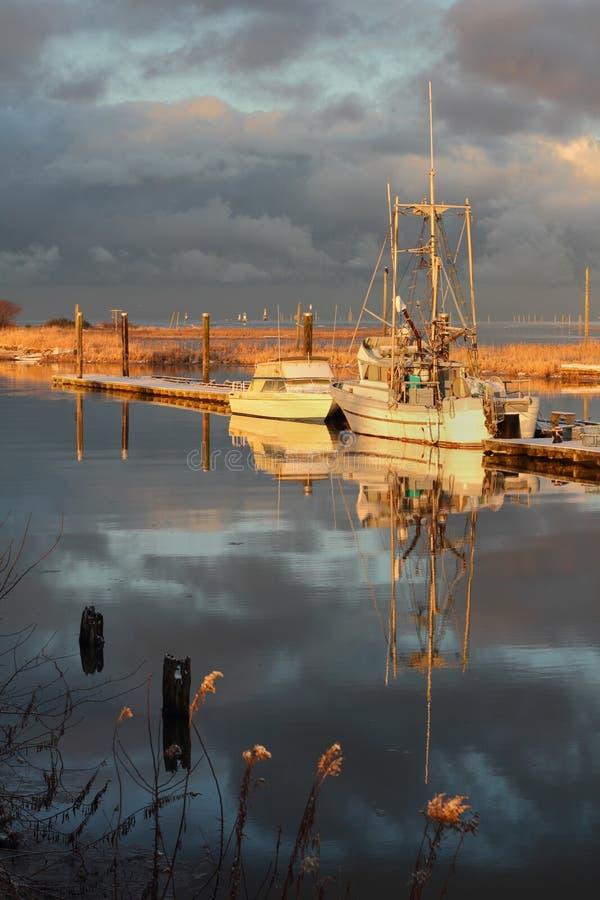 Scotch Pond Winter, Steveston royalty free stock photos