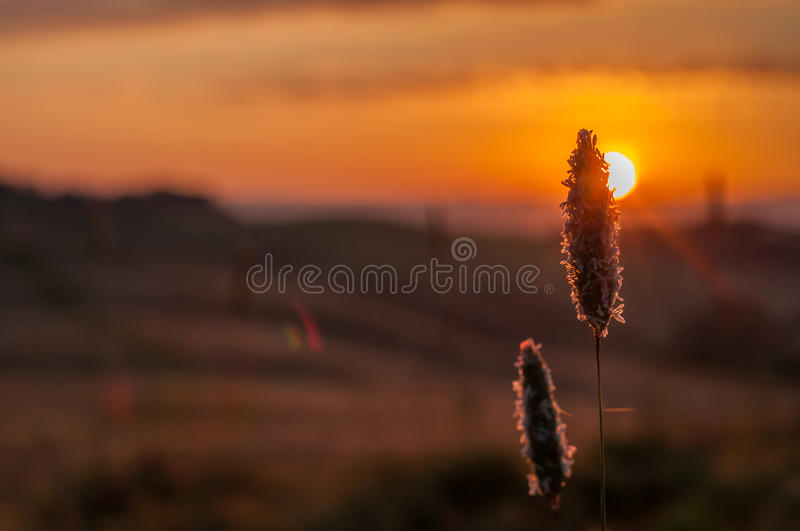 Early morning light in the Tuscany royalty free stock photography