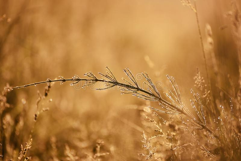 Early morning in the meadow. stock photography