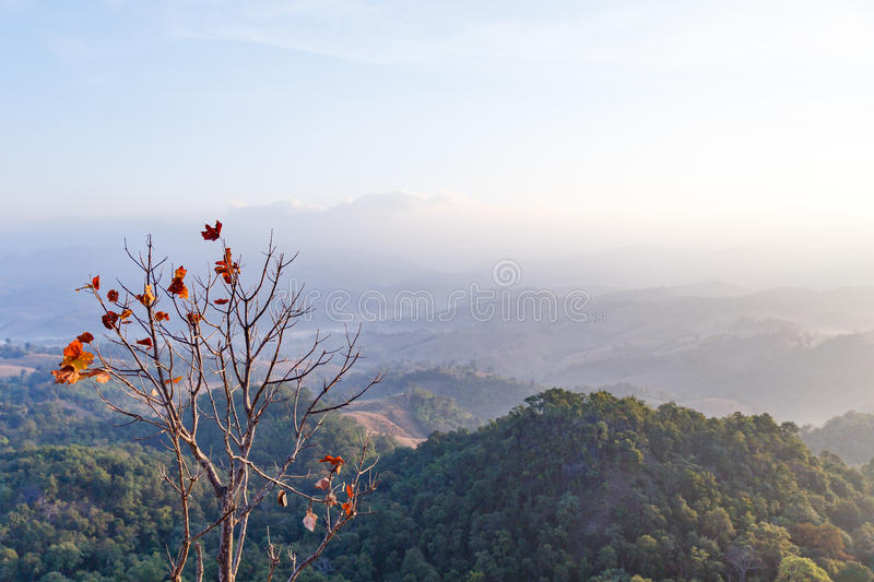 Early Morning Mountain Landscape with Lonely Tree at Umphang. Mae Hong Son Province, Thailand.  royalty free stock photo
