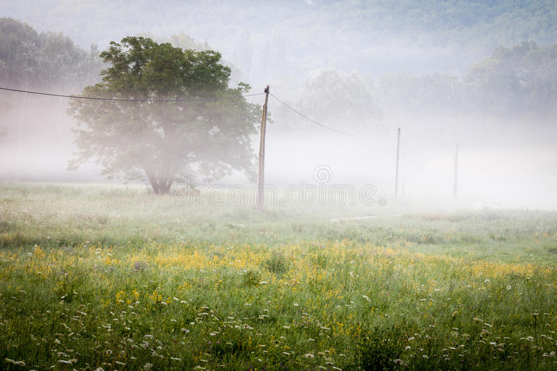 Early morning in provencal countryside stock photo