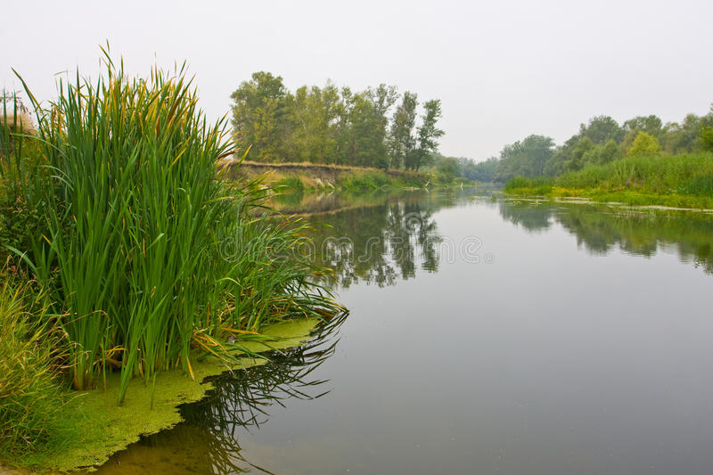 Download Early morning on river stock photo. Image of color, early - 10663534