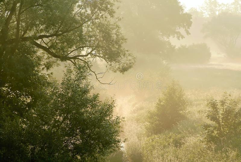 Download Early Morning Scenery With Trees In The Fog Stock Photo - Image: 10167238