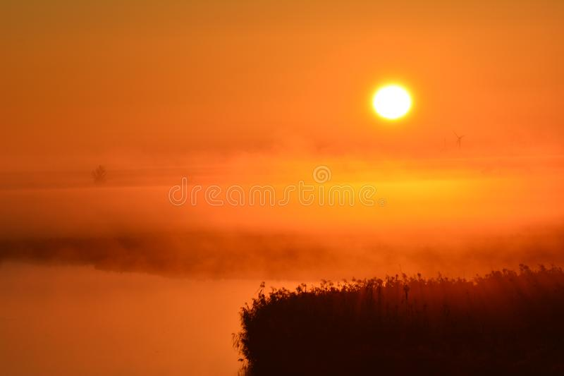 Early in the morning at the and of September watching the sunrise. Location: Oostvaardersplassen in Almere the Netherlands. In the front of the picture you see royalty free stock photos