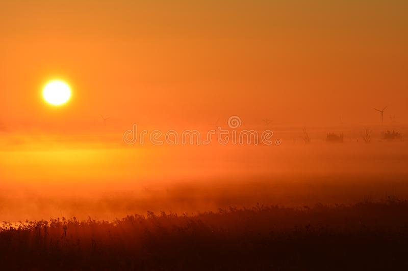 Early in the morning at the and of September watching the sunrise. Location: Oostvaardersplassen in Almere the Netherlands. In the front of the picture you see stock image