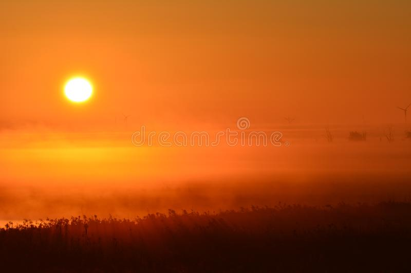 Early in the morning at the and of September watching the sunrise. Location: Oostvaardersplassen in Almere the Netherlands. In the front of the picture you see royalty free stock image