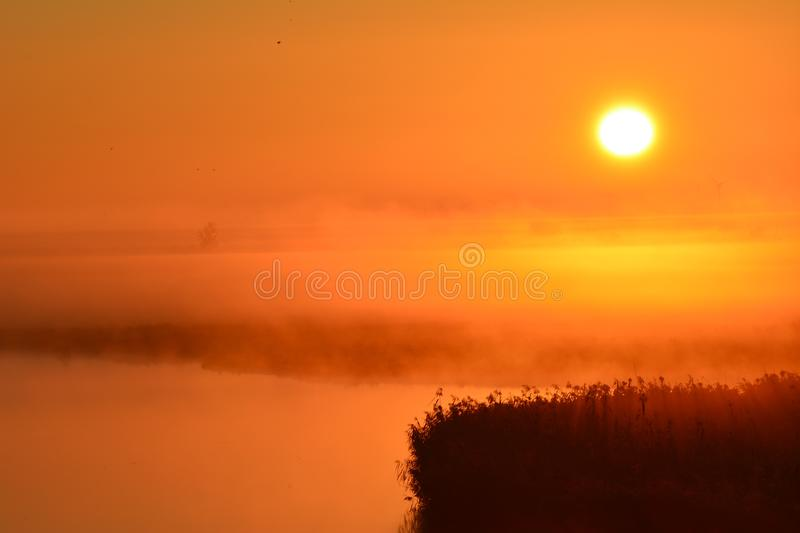 Early in the morning at the and of September watching the sunrise. Location: Oostvaardersplassen in Almere the Netherlands. In the front of the picture you see royalty free stock images