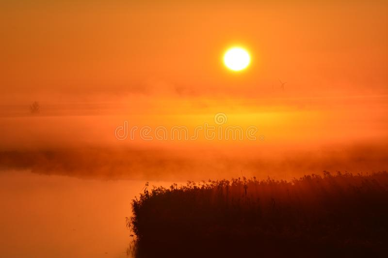 Early in the morning at the and of September watching the sunrise. Location: Oostvaardersplassen in Almere the Netherlands. In the front of the picture you see royalty free stock photo