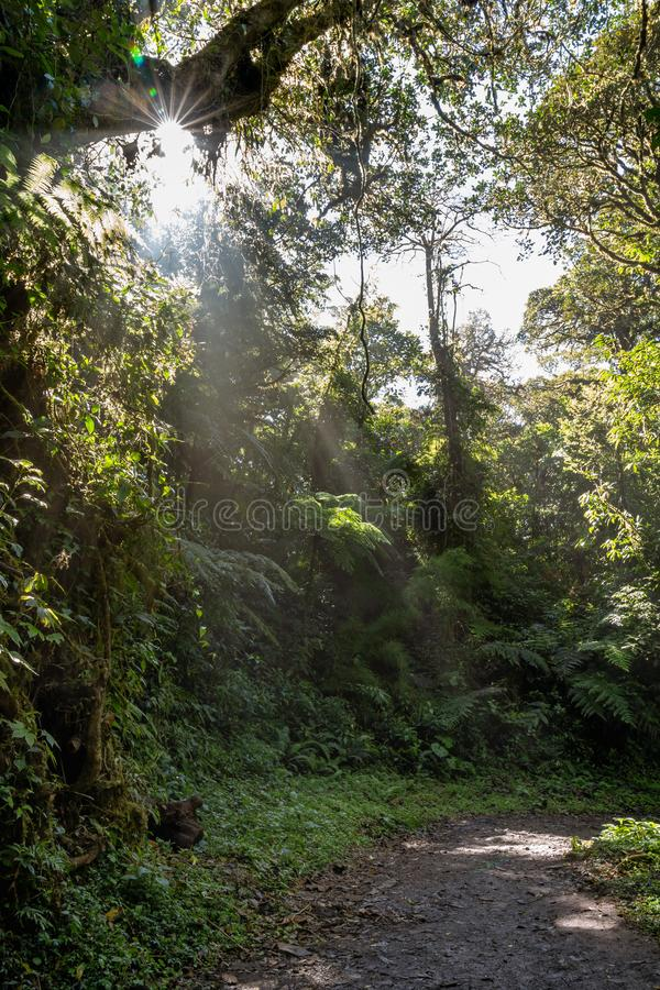 Early morning sun burst and rays on the jungle floor. Breaking through the trees royalty free stock images