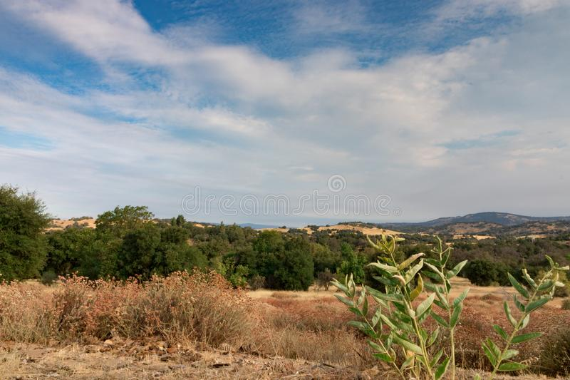 Early morning sun light on southern California hills in autumn,. Green common milkweed, asclepias syriaca, monarch butterfly food plant in foreground, buckwheat royalty free stock photo
