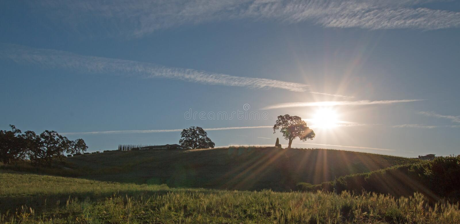 Early morning sun shining next to Valley Oak tree on hill in Paso Robles wine country in the Central Valley of California USA. Early morning sun shining next to stock images
