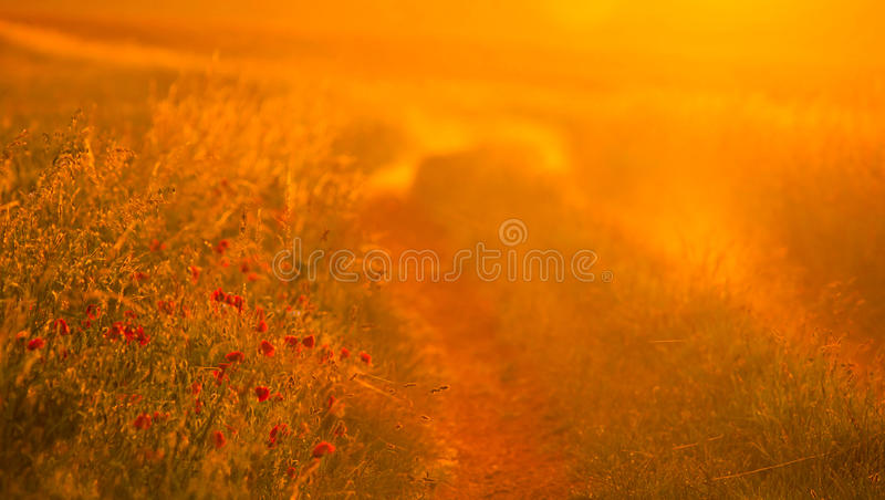 Download Early morning sunlight stock image. Image of grass, hazy - 22813079